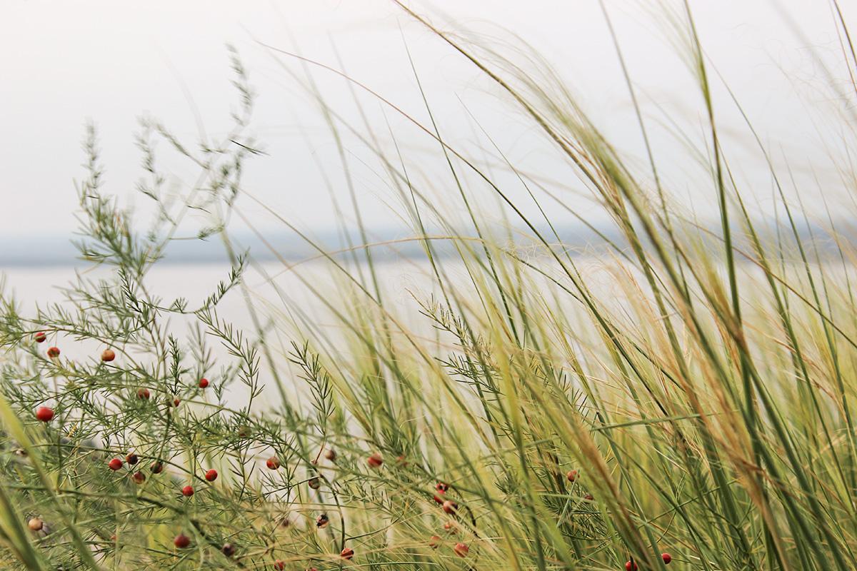 травы над рекой